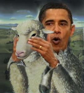 sheep_clothing