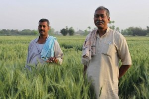 Indian-farmers
