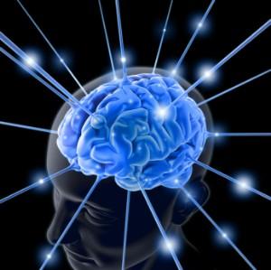 brain-300-x-299
