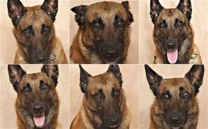 Dog-expressions_2511743b