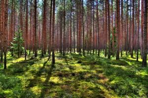 Eesti-mets