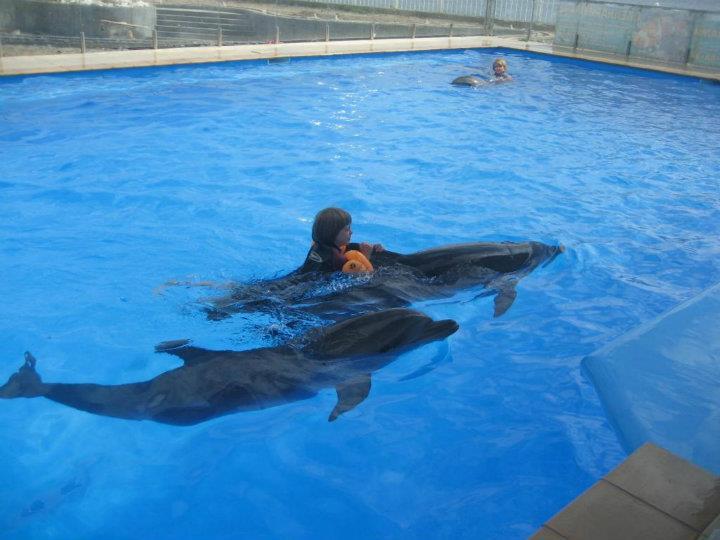 beryt-delfiiniteraapial1