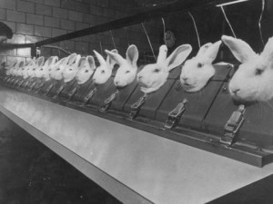 research-lab-at-eli-lilly-drug-manufacturing-plant-uses-rabbits-to-test-distilled-water