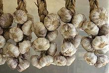 Allium_sativum_-_Garlic_-_01