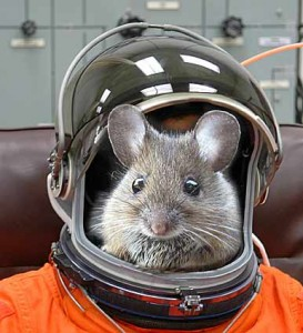 mouse-in-space