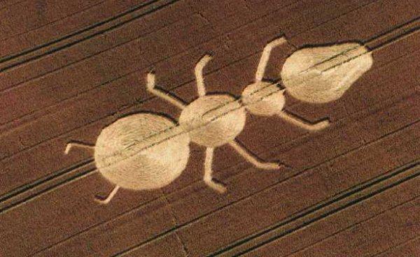 3 ant-crop