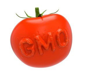 GMO tomato. Genetically modified food concept
