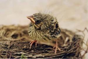 fledge2