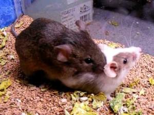 hiired