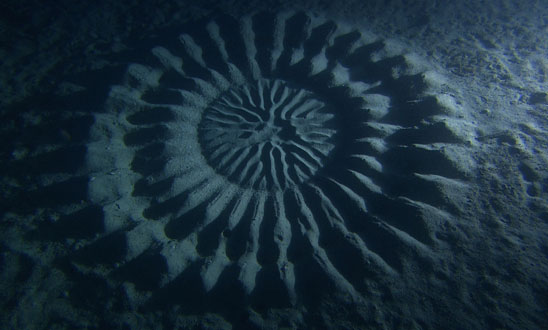 underwater-mystery-circle-6 1