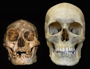 LB1 and modern human
