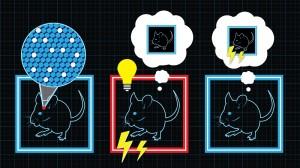 false-memory-mice
