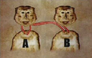 monkeyheads