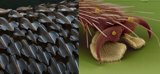 Shark skin (left) and a foot of a fly (right)