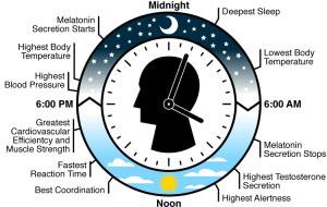 biological-clock-LG
