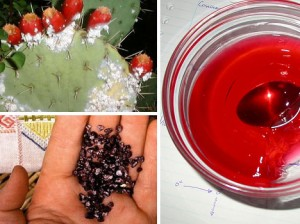 carmine-carminic-acid-red-cochineal