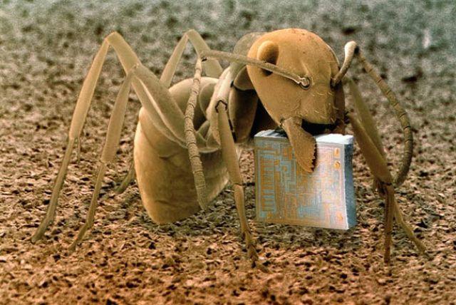 sipelgas
