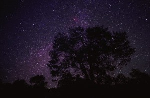 starry-sky-with-silhouetted-oak-tree-tim-fitzharris