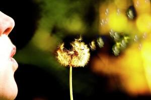 dandelion-heart-monte-arnold