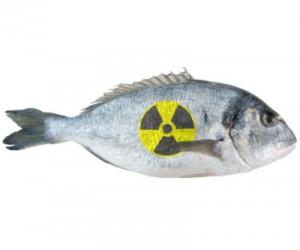 radioactive_fukushima_fish_333-300x250