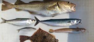 2013-04-18_Fish-biodiversity-Baltic_SNickel-GEOMAR_94d0c2dcb9