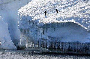 Adelie penguins near Browning Peninsula, Antarctica.