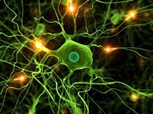 brain-cell_3