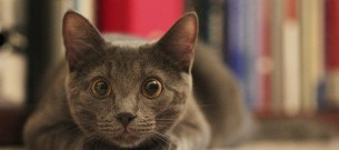 cat-bulging-eyes-closer-look-animal