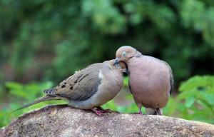 two-turtle-doves-cynthia-guinn
