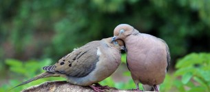 two-turtle-doves-cynthia-guinn