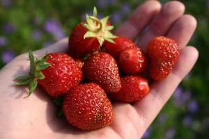 StrawberriesInHand1_ss_ALL