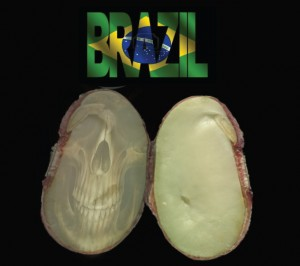 brazil_terminator2