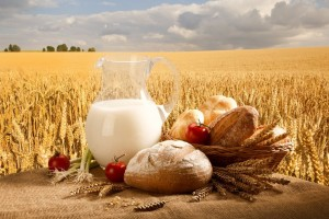 135052__milk-jug-bread-rolls-basket-tomatoes-onions-wheat-field-sky_p