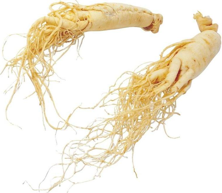 Asian ginseng NEW PHOTO
