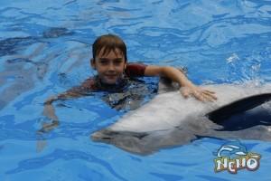 delfiiniravi