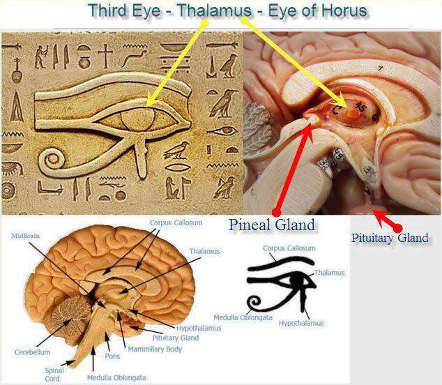 pineal-gland-eye-of-horus