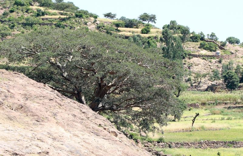 Warka Tree