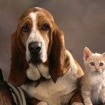 Basset_Dog_and_Kitten