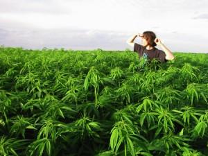 MarijuanaFarm