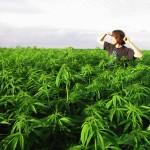 legalize-marijuana-california-environment1