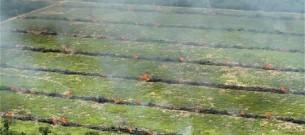 paraguay-fields_1882514c
