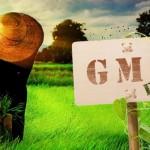 gmo_sign_field_farmer