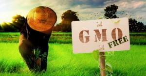 gmo_sign_field_farmer