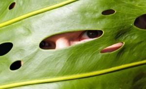 plant-vision.jpg.662x0_q70_crop-scale