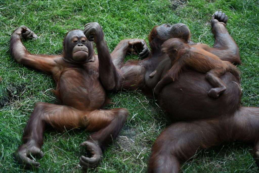 """""""Miks need ahvid inimesteks pole arenenud, kas neil on midagi viga?"""""""