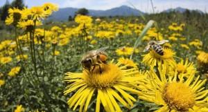 Bee-on-the-flower-HD-Wallpaper-6