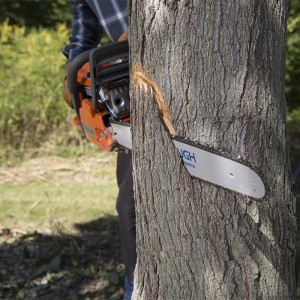 how-to-cut-down-a-tree-inline-first-cut